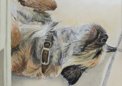 Border Terrier sleeping