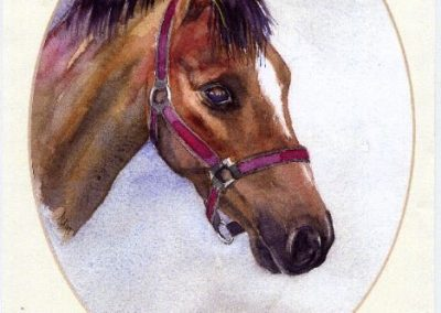 Charlotte's pony, watercolour SOLD