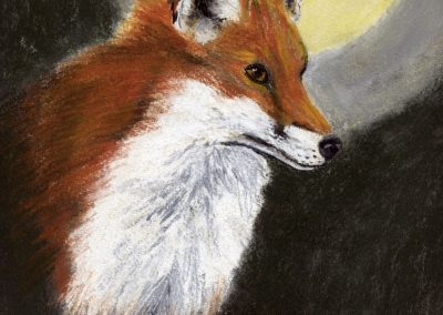 Fox by moonlight