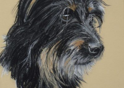 Head study of a Terrier, pastel SOLD