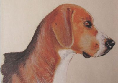 Head study of a Foxhound
