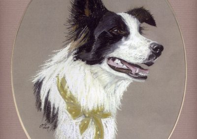 Holly the Collie SOLD