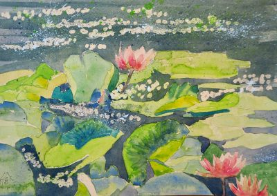 Waterlilies on the Village Pond